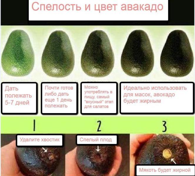 правильный выбор авокадо